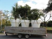 Pflanzentransport